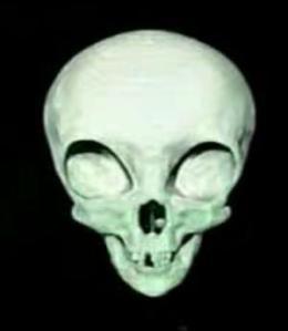 Image 3D du crâne du Visiteur